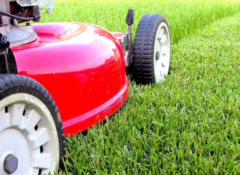 Tonte pelouse jardin d coration for Tonte jardin