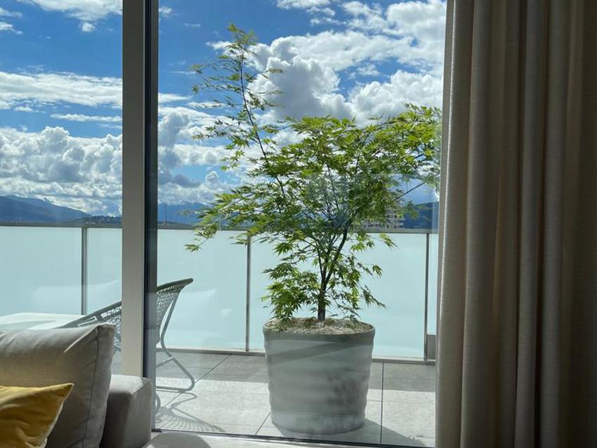 Végétalisation terrasse, balcon – Vandœuvres, Genève