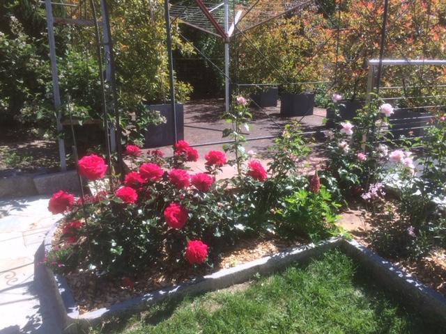 Plantation massif, allées jardin – Petit Lancy