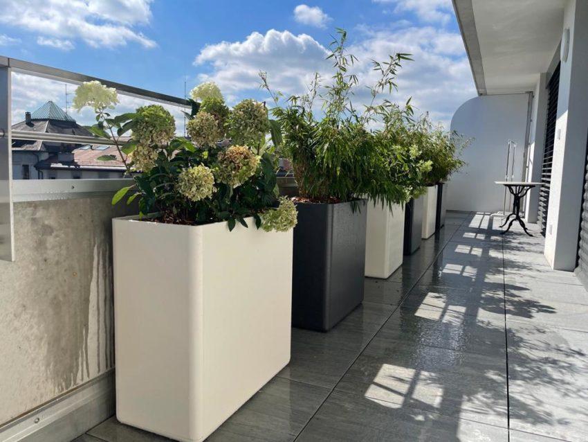 Création terrasse méditerranéenne – Genève, Saint-Jean
