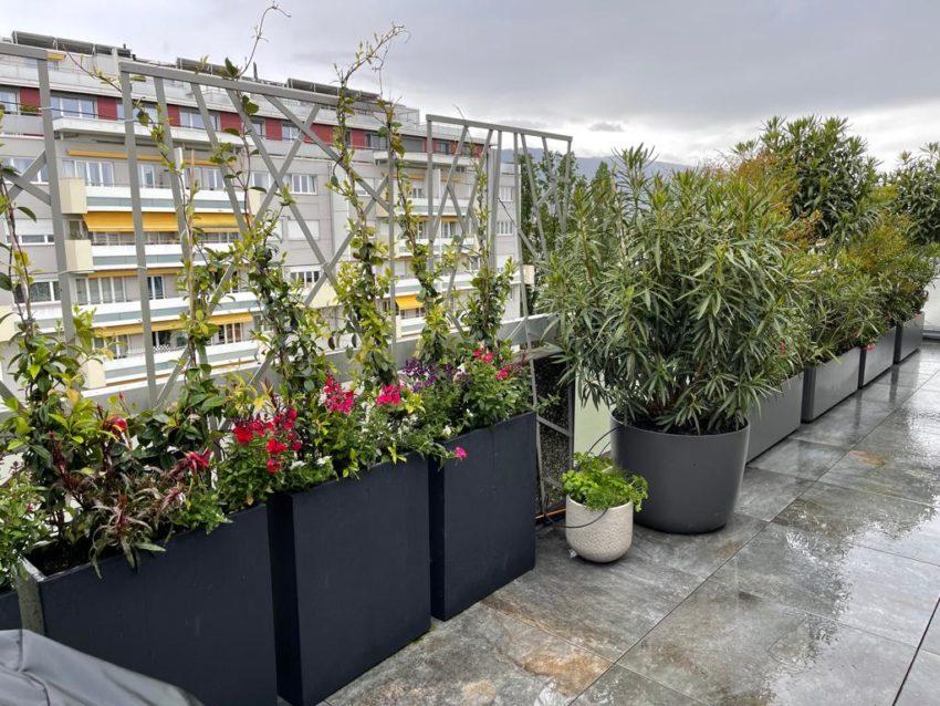 Plantations bacs terrasse attique – Champel