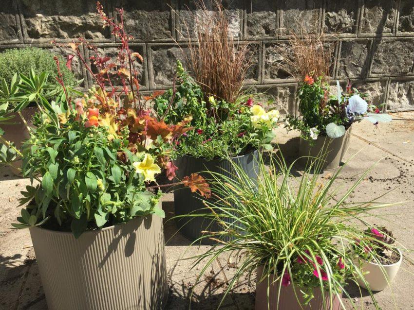 Installation, plantation pots, jardinières balcon – Genève
