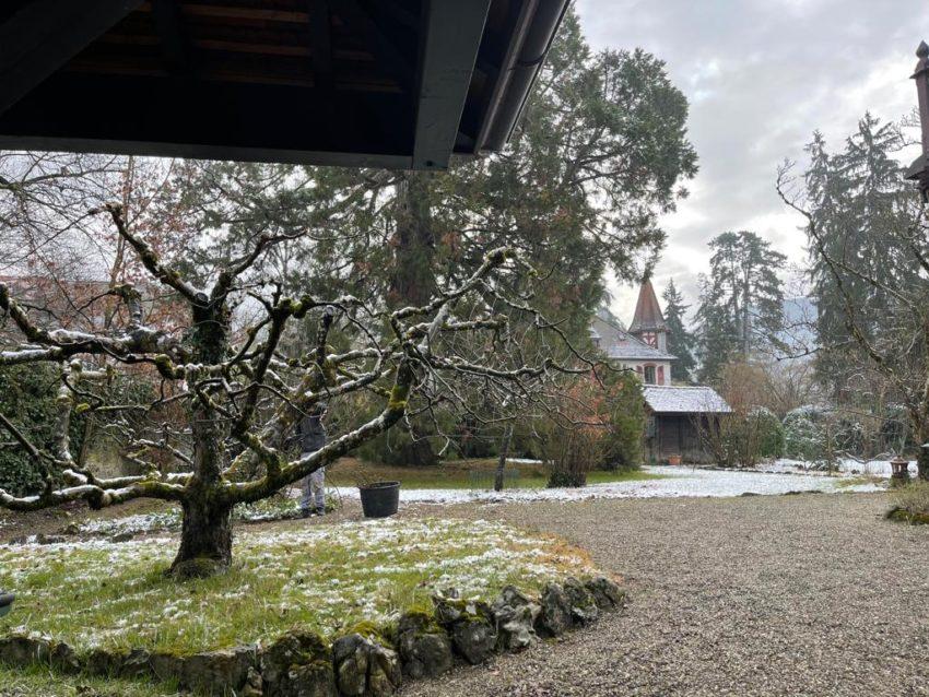 Taille arbres et fruitiers – Veyrier, Genève